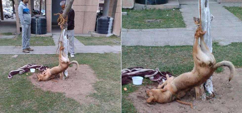 A Stray Dog in Chandigarh Tied Upside Down, Beaten ...
