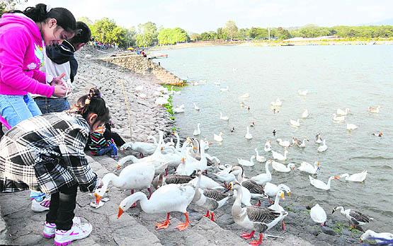 sukhna-lake-ducks