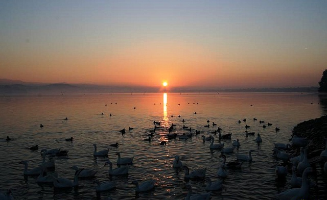 sukhna-lake-sunrise