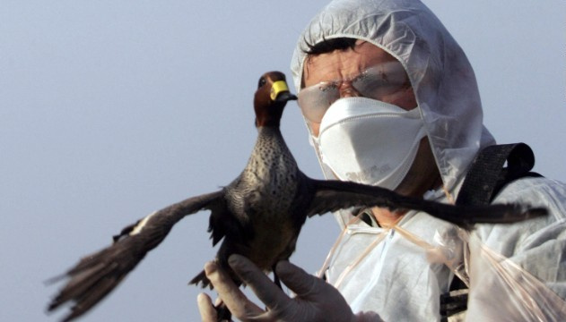 bird-flu-in-chandigarh