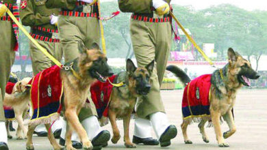 itbp-dogs-security-obama