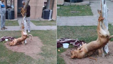 chandigarh-men-beat-up-a-dog-amp-tie-him-to-a-tree-header-1454176246_980x457