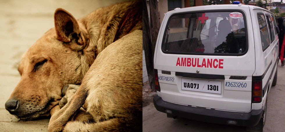 chandigarh-ambulance-animals