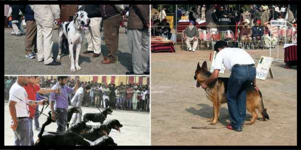 dog-show-Chandigarh