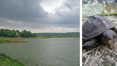turtle-park-thana-haryana