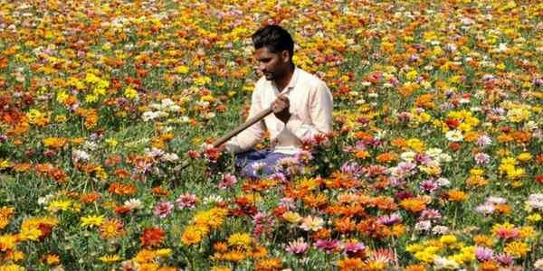 flower-field-haryana