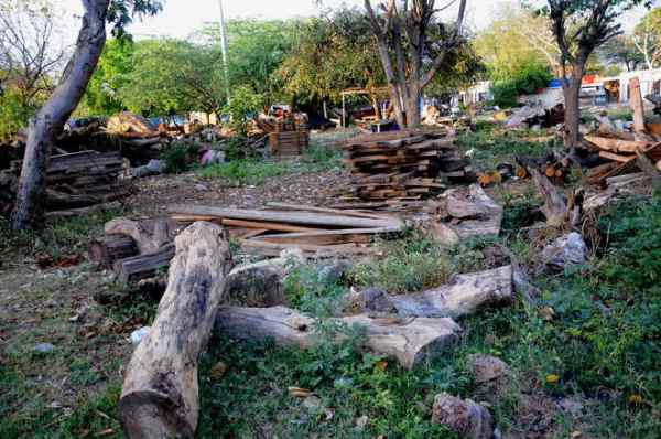 timber-market-chandigarh