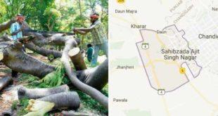 500-trees-cut-down-mohali