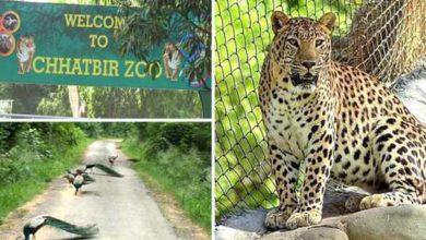 chatbir-zoo-zirkpur