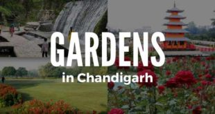 gardens-in-chandigarh