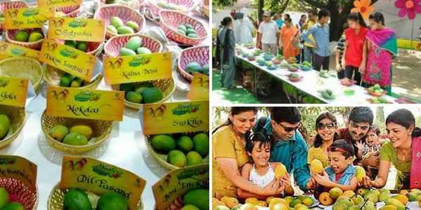 mango-mela-pinjore
