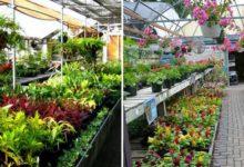 plant-nursery-chandigarh