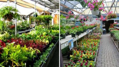 plant-nursery-chandigarh